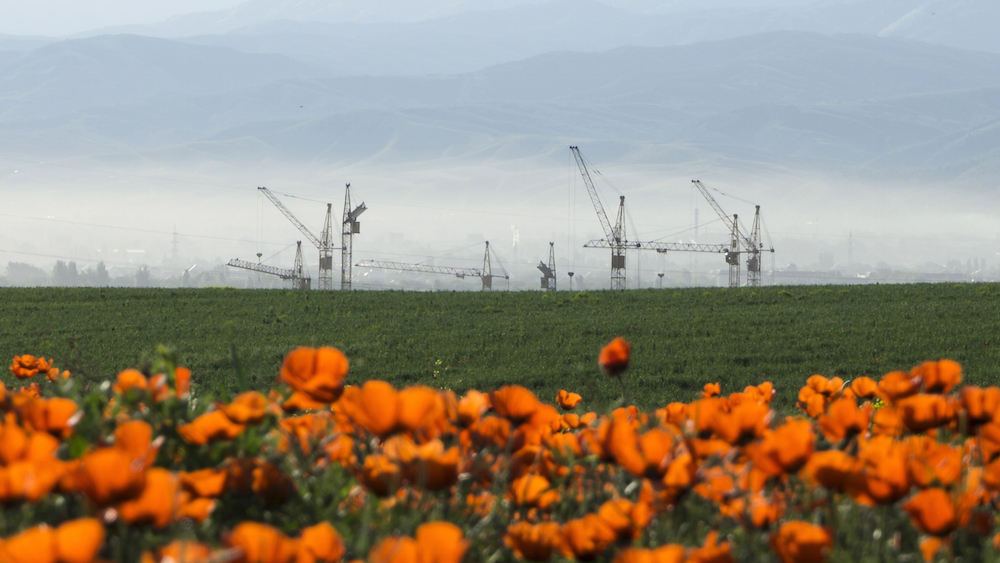 Construction cranes are seen behind a blossoming poppy field at outskirts of Almaty, Kazakhstan, May 14, 2015. REUTERS/Shamil Zhumatov - RTX1CVXG